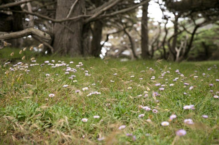 wild flowers near cypress tree