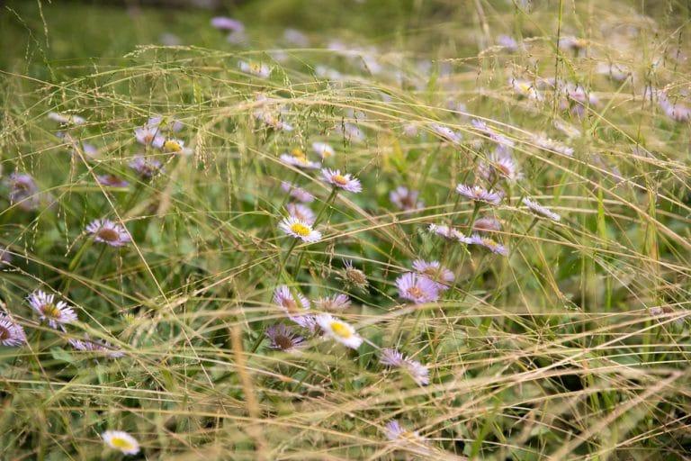 pink wild flowers among grass