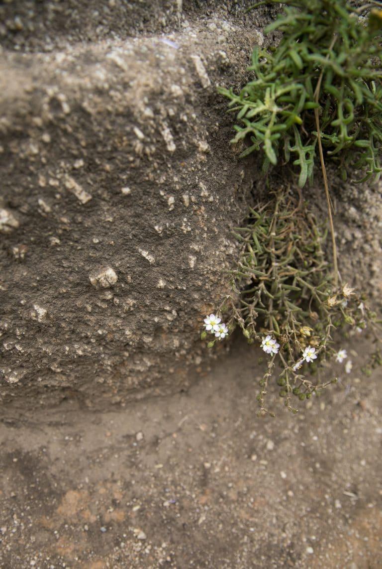 wild flowers between rocks on cliff