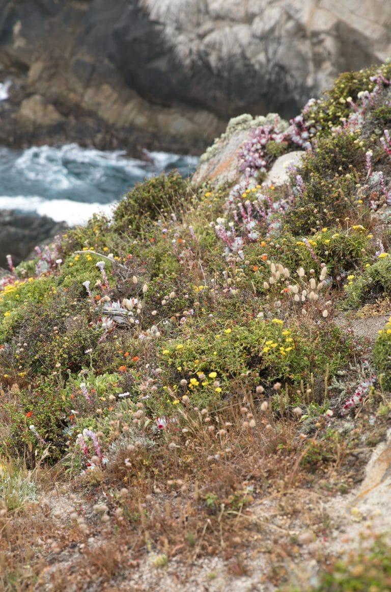 wild flowers near coast