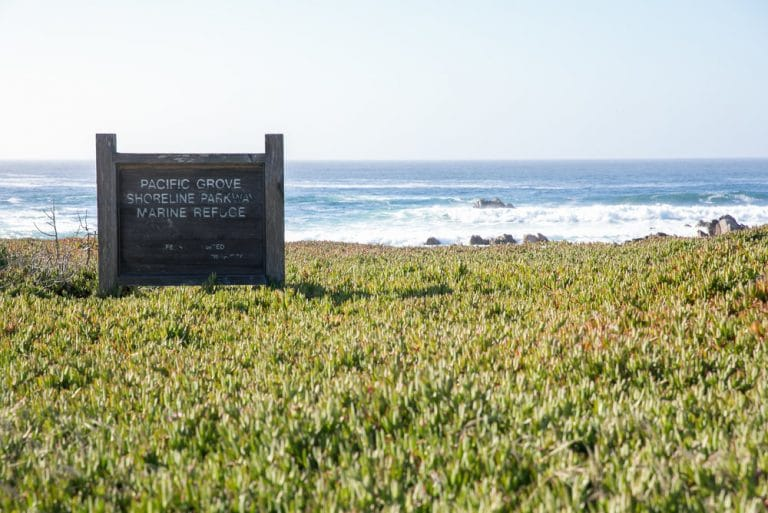 sign for pacific grove shoreline way marine refuge with ocean in background surrounded by iceplant