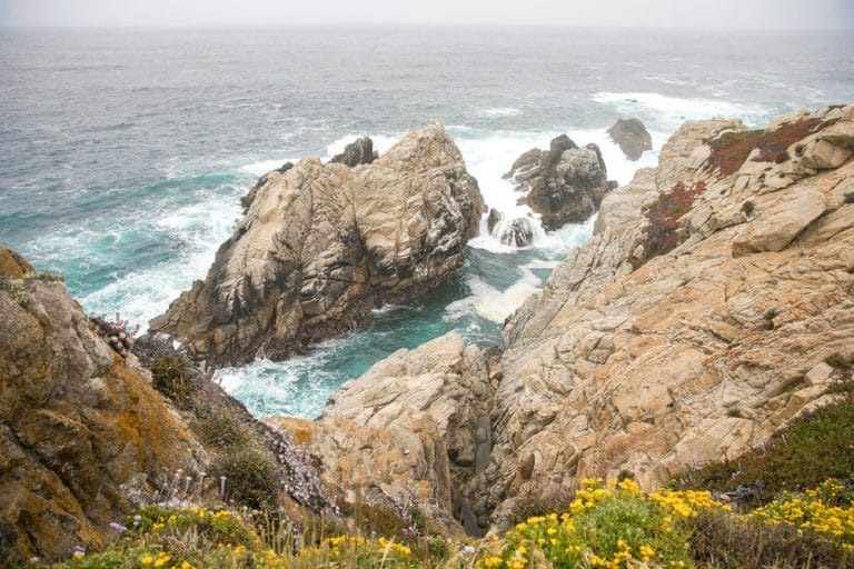big sur coast with wild flowers