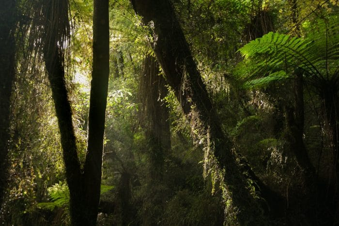 Top 10 Reasons to Visit New Zealand- Rainforest