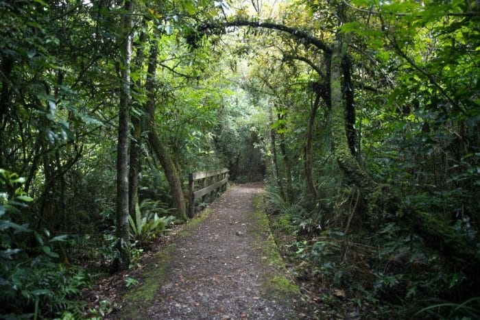 Peel Forest, Big Tree Walk