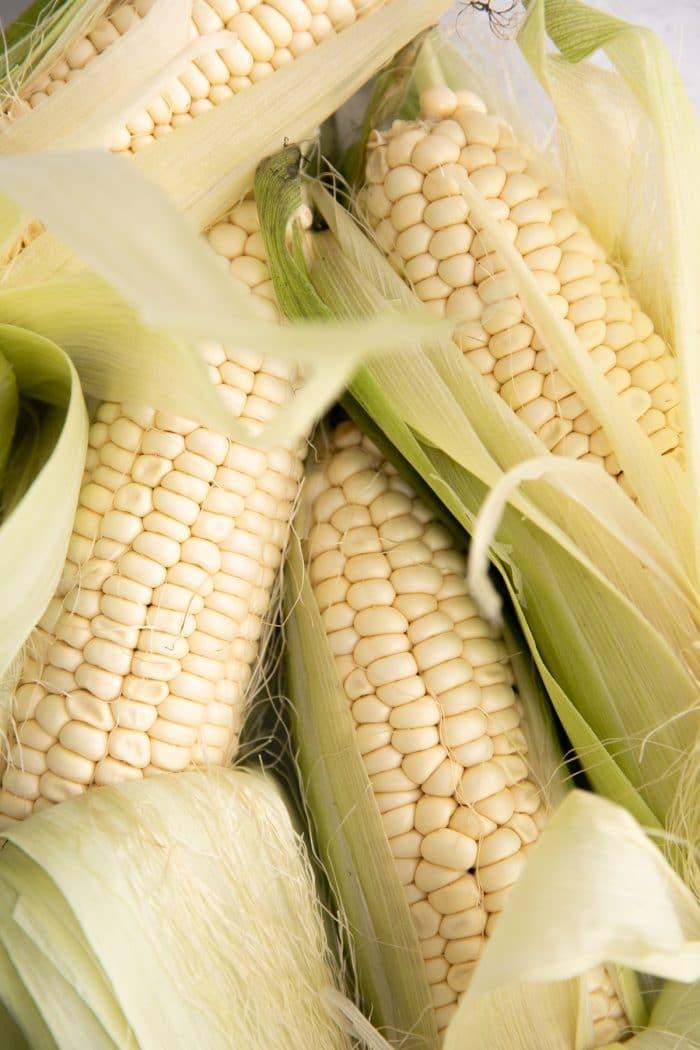 Partially shucked corn on the Cob